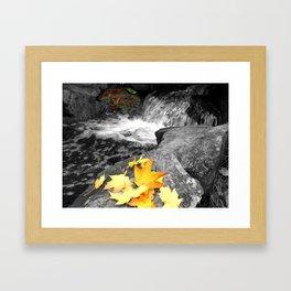 A Splash of Fall Framed Art Print