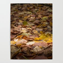 Streak of light on beautifully colored natural autumn leaves close view Poster