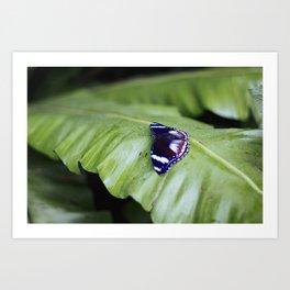 Butterfly 3 - Purple Art Print
