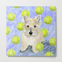 Miss Caroline the Cairn Terrier is Obsessed About Fetching Tennis Balls Metal Print