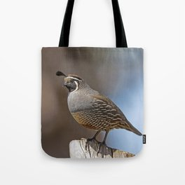 Male California Quail (Callipepla Californica) stands on a fence post near Point Reyes California. Tote Bag