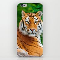 asian iPhone & iPod Skins featuring Asian Tiger by Tom Lee
