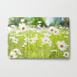 Daisy Meadow Metal Print