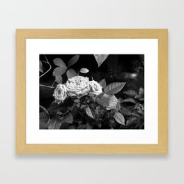 Roses II Framed Art Print