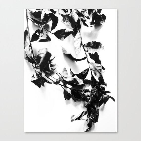 Bay leaves 4 Canvas Print