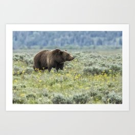 Smiling Grizzly #399 Art Print