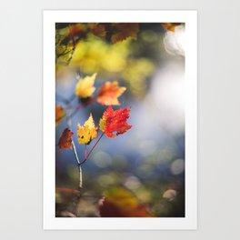 Autumn Soliloquy Art Print