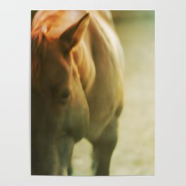Gold Horse Poster