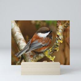Chestnut-Backed Chickadee in the Cherry Tree Mini Art Print