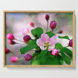 Crabapple flowers and buds. Outburst of life Serving Tray