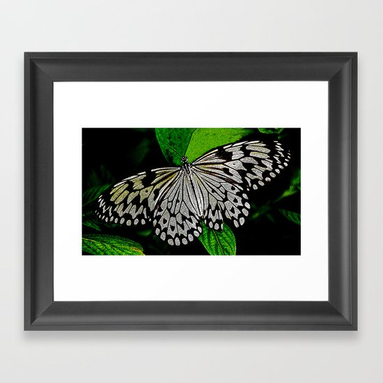 LACE -WINGED Framed Art Print