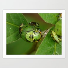 green bugs Art Print