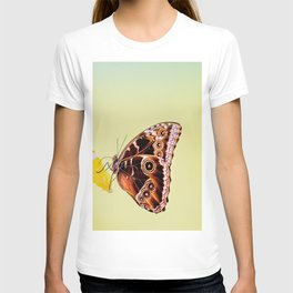 Morpho butterfly sitting on the orange and eating T-shirt