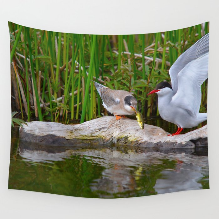 Baby Arctic Tern Feeding Wall Tapestry