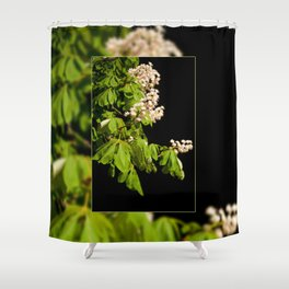 blooming Aesculus tree on black Shower Curtain