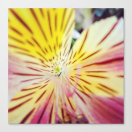 Surprise in the flower Canvas Print