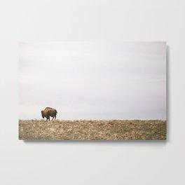Bison on the edge Metal Print