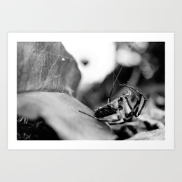 Spider and Leaf in Black and White Art Print