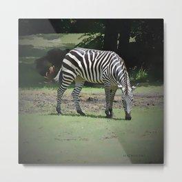 Zebra Metal Print