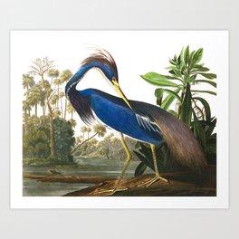 Louisiana Heron by John James Audubon Art Print