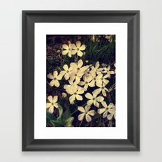Phlox Framed Art Print