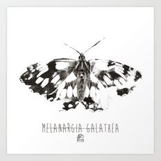 Butter flies - Melanargia_Galathea Art Print