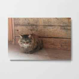 Suspicious Cat Metal Print