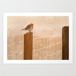 Robin Waiting Art Print