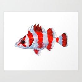 Flag Rockfish - plain Art Print