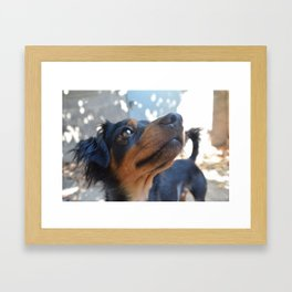 Chalie or Charly is one beatiful dog Framed Art Print