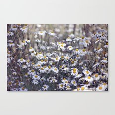 Wild Daisies Field 4130 Canvas Print