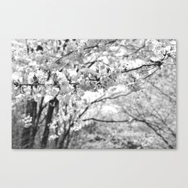 Where The White Blossoms Grow Canvas Print