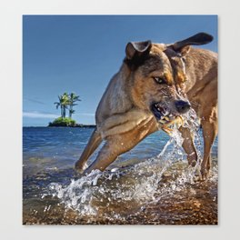 Dogs with the game face on .48 Canvas Print