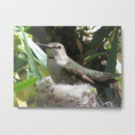 Hummingbird in the nest Metal Print