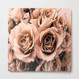 Blush Roses Metal Print