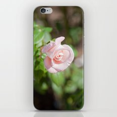 Little Pink Rose iPhone & iPod Skin
