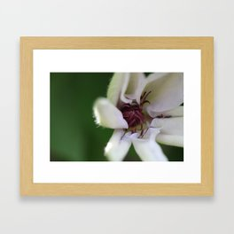 Spider Blooming Framed Art Print