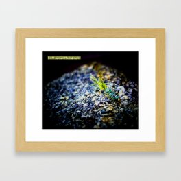 Wooley Bugger Framed Art Print