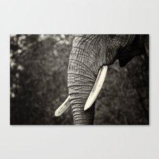 Ivory Tusks Canvas Print