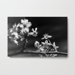 Wabi Sabi - blossoms Metal Print