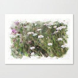 White Pincushion Wildflowers Digital Watercolor Coachella Valley Preserve Canvas Print