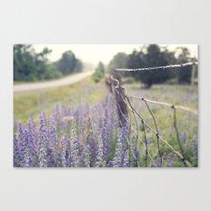 Lavender road Canvas Print
