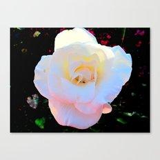 Love rose Canvas Print