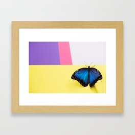 Morpho butterfly sitting on the colored background Framed Art Print