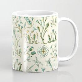 Ernst Haeckel - Scientific Illustration - Campanariae Coffee Mug