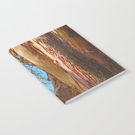 MADRONA TREE BY THE SEA Notebook
