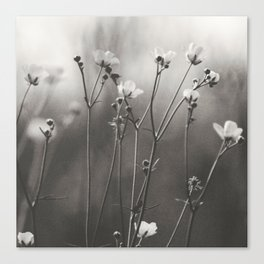 Blurry dreams Canvas Print