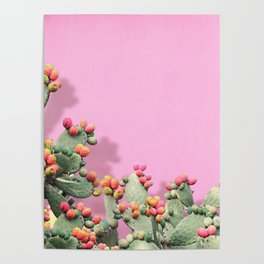 Prickly Pear plants on Pink Poster