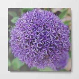 Purple Pom Metal Print