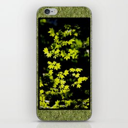 late summer sunny maple leaves iPhone Skin